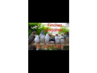 Finches Required