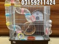 hamster-and-hamster-cage-in-karachi-small-2