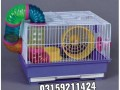 hamster-and-hamster-cage-in-karachi-small-3