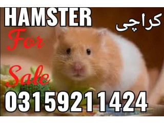 Hamster and Hamster Cage in Karachi