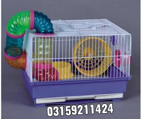 hamster-and-hamster-cage-in-karachi-big-3