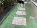 german-shephard-female-puppy-3-months-small-1