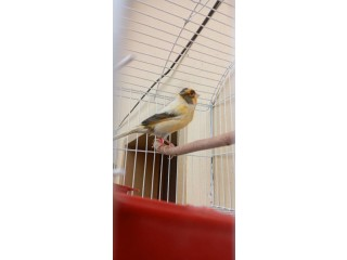 Simple canary
